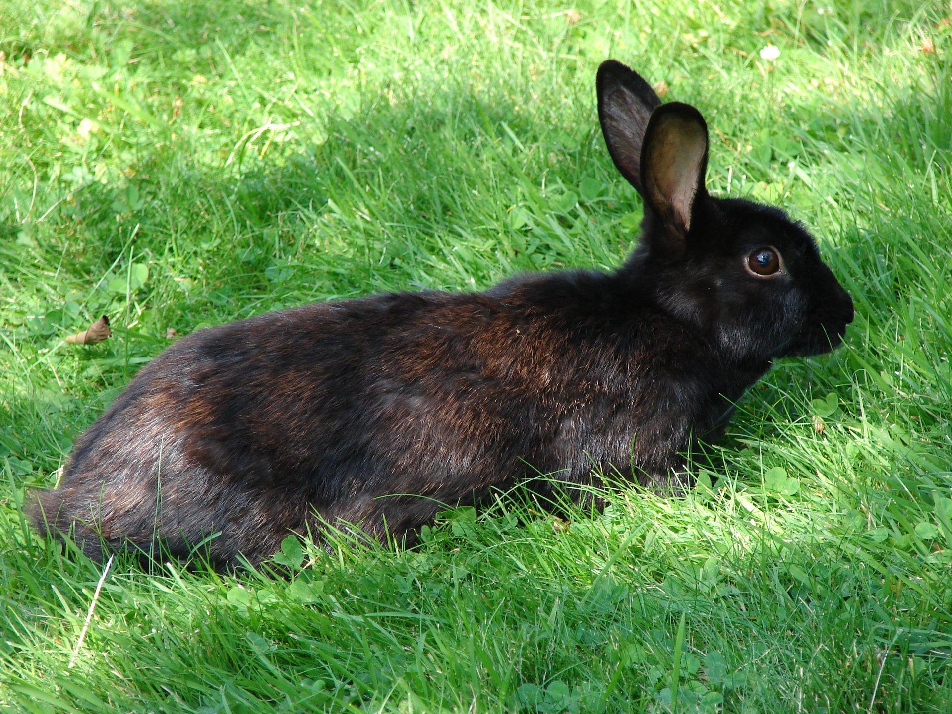 bunny-1391945-1920x1440